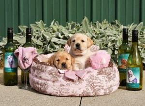 10th Annual Dinner Art & Wine for Canines @ Receptions - Loveland | Loveland | Ohio | United States