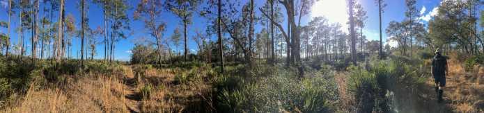 Ocala National Forest Hike