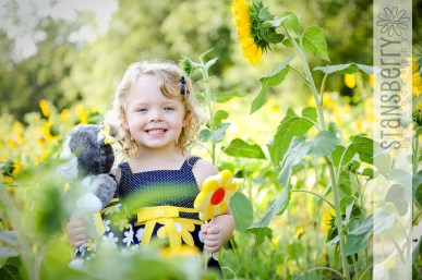 sunflowers-2189