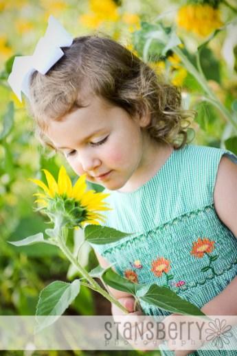 sunflowers-2225