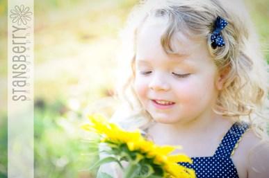 sunflowers-2280