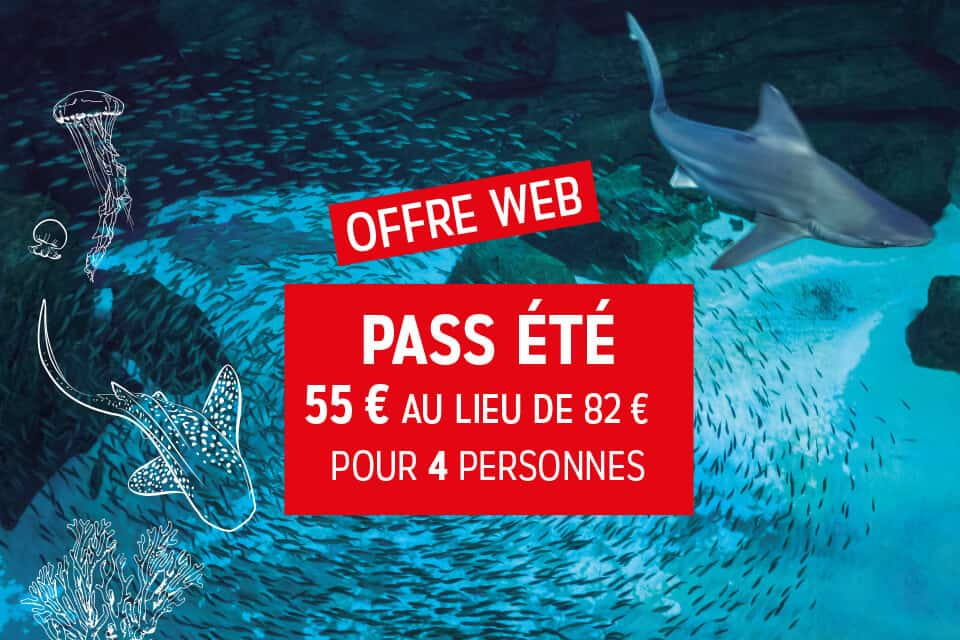 Le PASS ETE - Aquarium de Paris