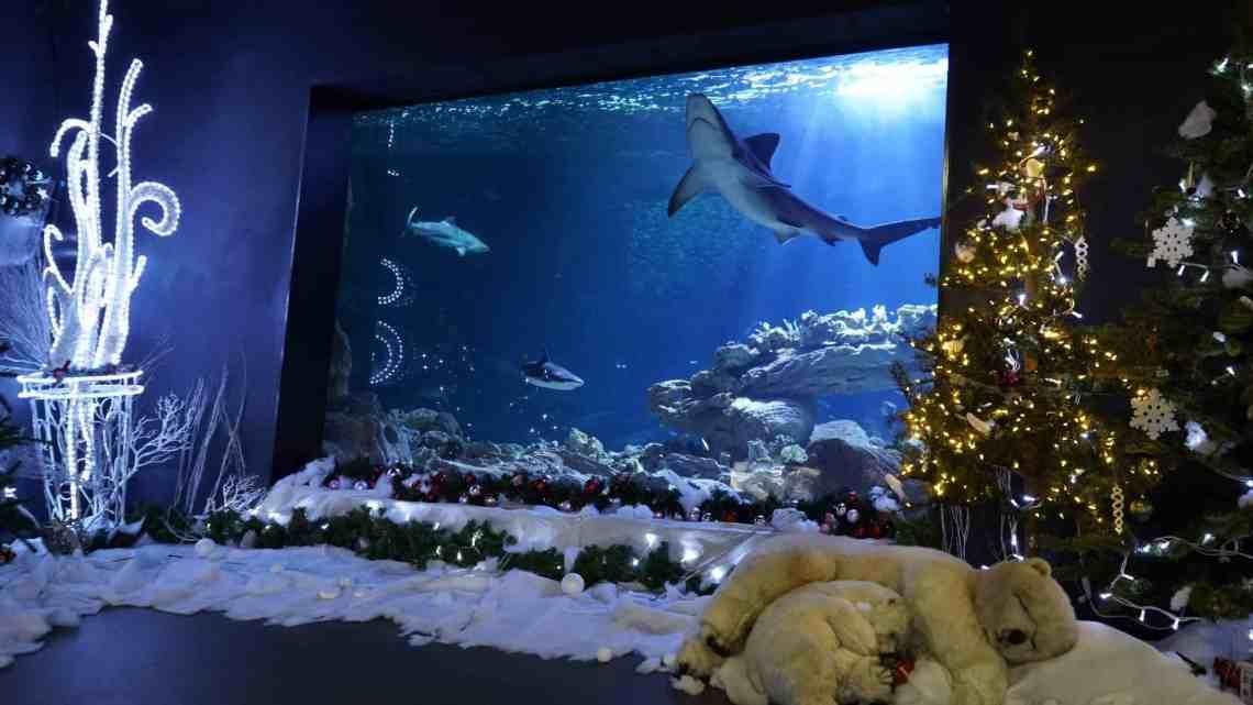 noel à l'Aquarium de Paris