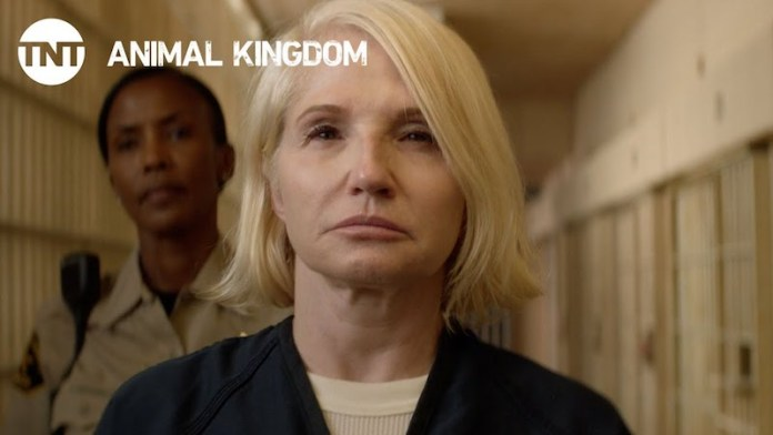 Animal Kingdom 3 stagione