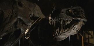 Dinosaurs film documentario