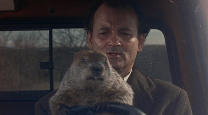 Bill Murray marmotta