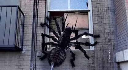spiders_2