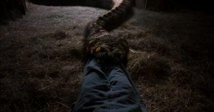 anaconda33