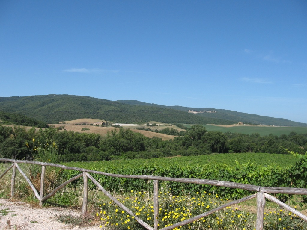 One of Casato Prime Donne's vineyards