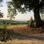 mattino a Colle Piccino