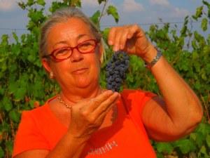 Merlot Donatella Cinelli Colombini  mostra un grappolo