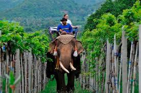 Hua-Hin-Hills-Siam-Winery-Thailand-vigne-più-meravigliose-del-mondo