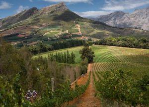 Sud-Africa-vigneti