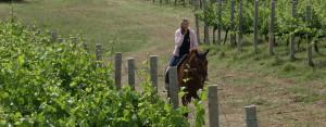 Wine-and-horses-Drei-Donà