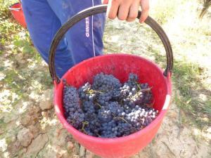 L'armonia-del-vino-un-carattere da-cercare-nella-natura