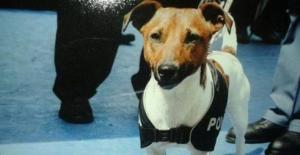 Cane-addestrato-dalla-polizia