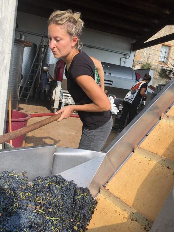Vendemmia-2019-L'enologa-Sabrina-con-l'uva-di-Merlot-della-Fattoria-del-Colle