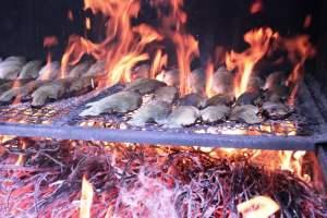 brustico-cottura-del-pesce-ristorante-pesce-d'oro-a-chiusi