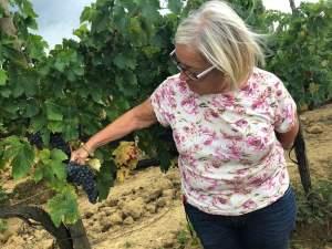 Vendemmia 2018 sangiovese Fattoria del Colle Donatella Cinelli Colombini