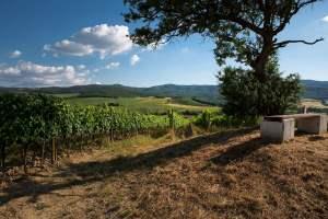 Montalcino-Brunello-CasatoPrimeDonne
