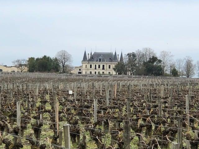 Bordeaux-vigneto