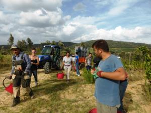 Vendemmia-experience-2020-in-Toscana