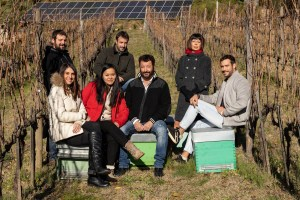 Vineyard Animals: bees in Montalcino at Villa I Cipressi - Hubert Ciacci