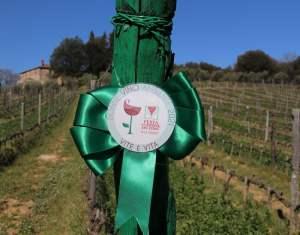 Donne Vino e Ambiente - Festa delle Donne del Vino 2021