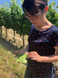 tradition and manual care win on technology in front of turists' eyes. Violante Cinelli Colombini in the Brunello vineyard.
