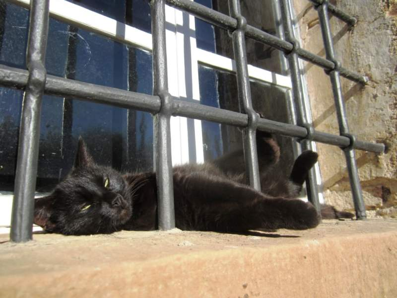 Fattoria del Colle gatto nero