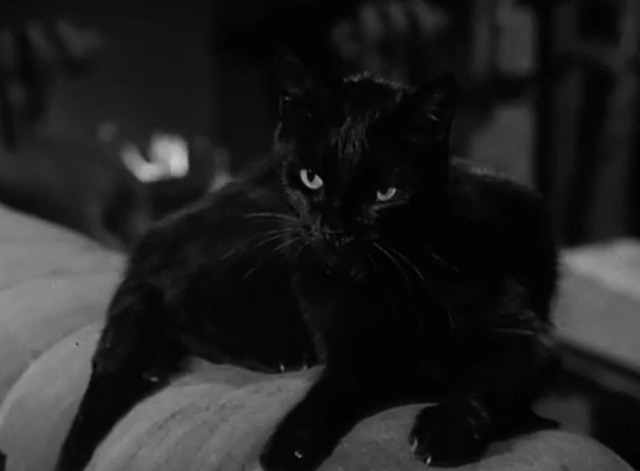 Image result for the munsters cat