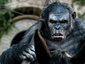 FOX_PMC_Internet_851x351_Hoje-e1406322527948 Planeta dos Macacos: O Confronto