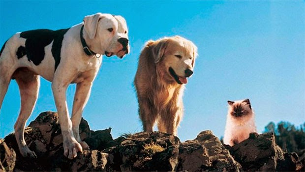 maxresdefault-838x471 Top5: Filmes com cachorros