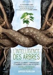 """Affiche du film """"L'intelligence des Arbres"""""""