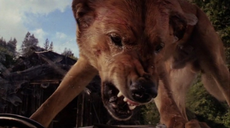 """RARE HORROR GEMS WITH JEFF SANDERS: """"THE PACK"""""""