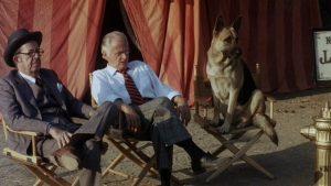 won-ton-ton-dog-seated