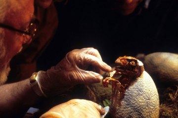 Jurassic Park (1993) - Foto: Divulgação