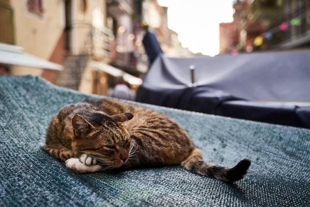 Sieste d'un chat dans les Cinque Terre
