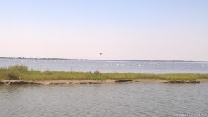 Parco del Delta del Po, Sacca di Goro, fenicotteri rosa e cormorani