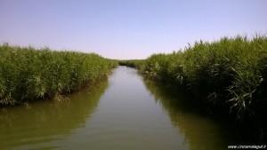 Parco del Delta del Po, Sacca di Goro, vie d'acque tra i canneti