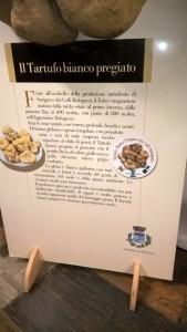Pannello esplicativo del tartufo bianco pregiato alla Tartufesta di Savigno