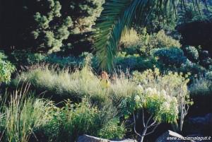 Isole Canarie, Gran Canaria, vegetazione tropicale