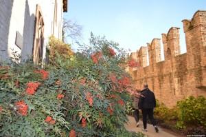 Fontanellato, Rocca Sanvitale, Giardino di Flora