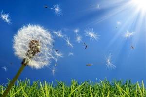 allergie pollini