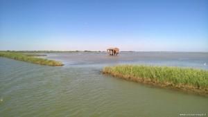 Delta del Po rami meridionali, Sacca di Scardovari e Po della Donzella