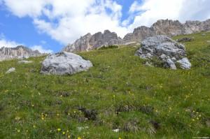 Latemar, distese di arnica sul sentiero Latemar.Panorama