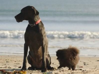 cane amico di famiglia