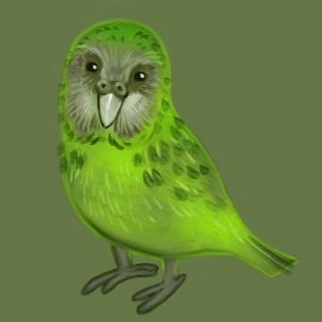 pappagallo troppo pesante per volare