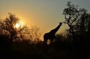 sud africa 2011 091