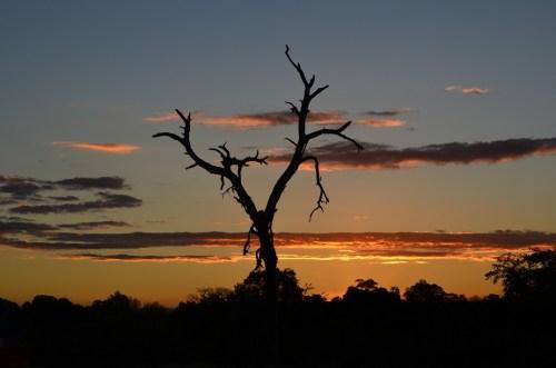 sud africa 2011 776
